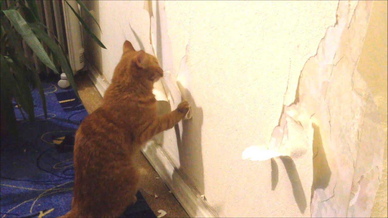 Кот - рецидивист пытается освободить ых из приюта