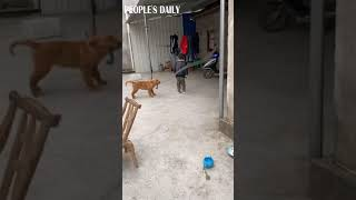 Count me in! The dog turns the rope when his friend jumps rope.