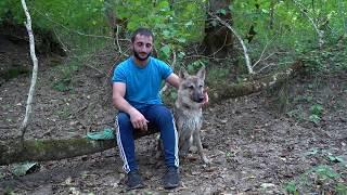Питомник, знакомство с красавцами, в диких условиях)