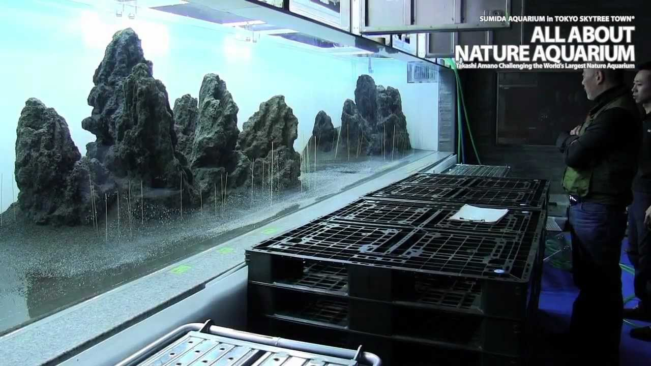 TAKASHI AMANO ? SUMIDA AQUARIUM Vol.2 - YouTube