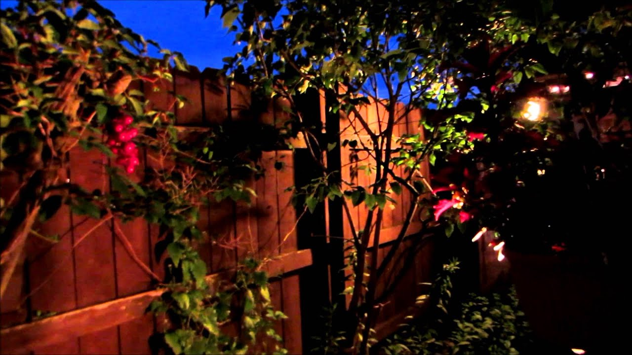 Beautiful flower garden show at night youtube for A night at the garden