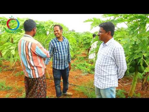 Natural Farming | pomegranate intercropping | MALLIKARJUN-4