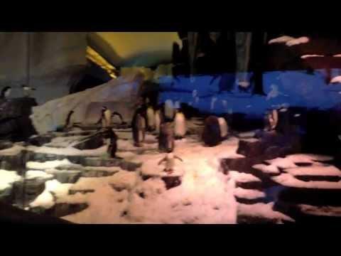 Antarctica: Empire of the Penguin [Ride POV]