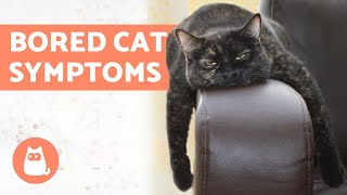 5 Symptoms of a BORED CAT  (and What to Do)