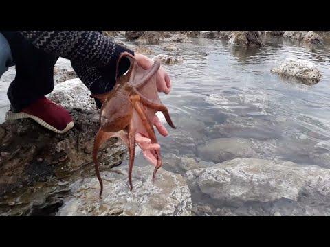Приручаем осьминога и мурену мои странные друзья
