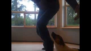Dog Trick 1 - Jump Into Your Arms
