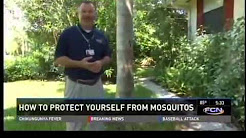 Protect Yourself from Mosquitos: Mosquito Control in Jacksonville FL