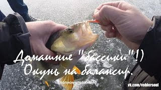 видео Зимняя ловля окуня на балансир