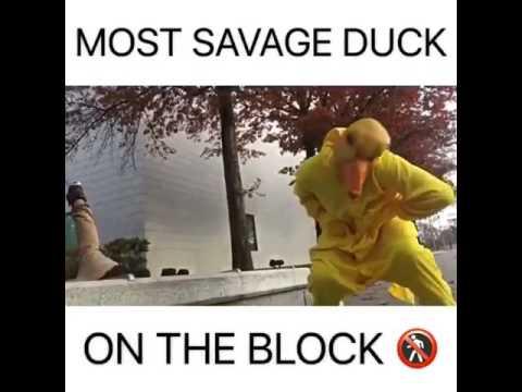 Most Savage Duck!!! (DANK MEMES)