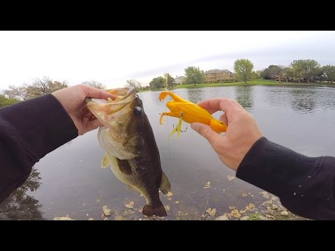 Baby DUCK Lure Fishing Challenge?