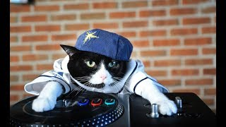 Лучшие приколы с животными 2019 март. Смешные видео про кошек, смешные коты приколы 2019 и кошки #43