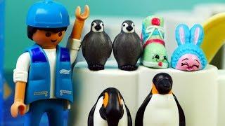 Shopkins • Wybieg dla Pingwinów • Playmobil Family Fun • Bajki dla dzieci