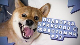 Милые и смешные  животные #23 Cute and Funny animals #23