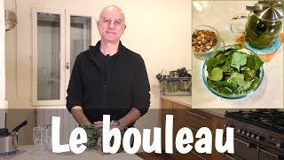 Le bouleau (Betula pendula), feuilles, écorce, sève : douleurs articulaires, problèmes de peau...