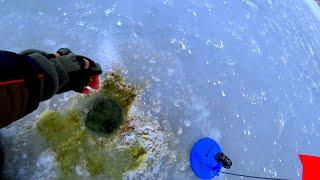 Рыбалка НА ДИКОМ ПРУДУ ПОДЛЁДНАЯ СЪЁМКА ЩУКИ АТАКУЮТ первый лед
