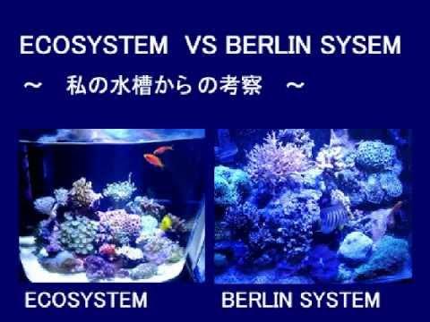 Berlin System v.s Eco System  ベルリンシステム対エコステム
