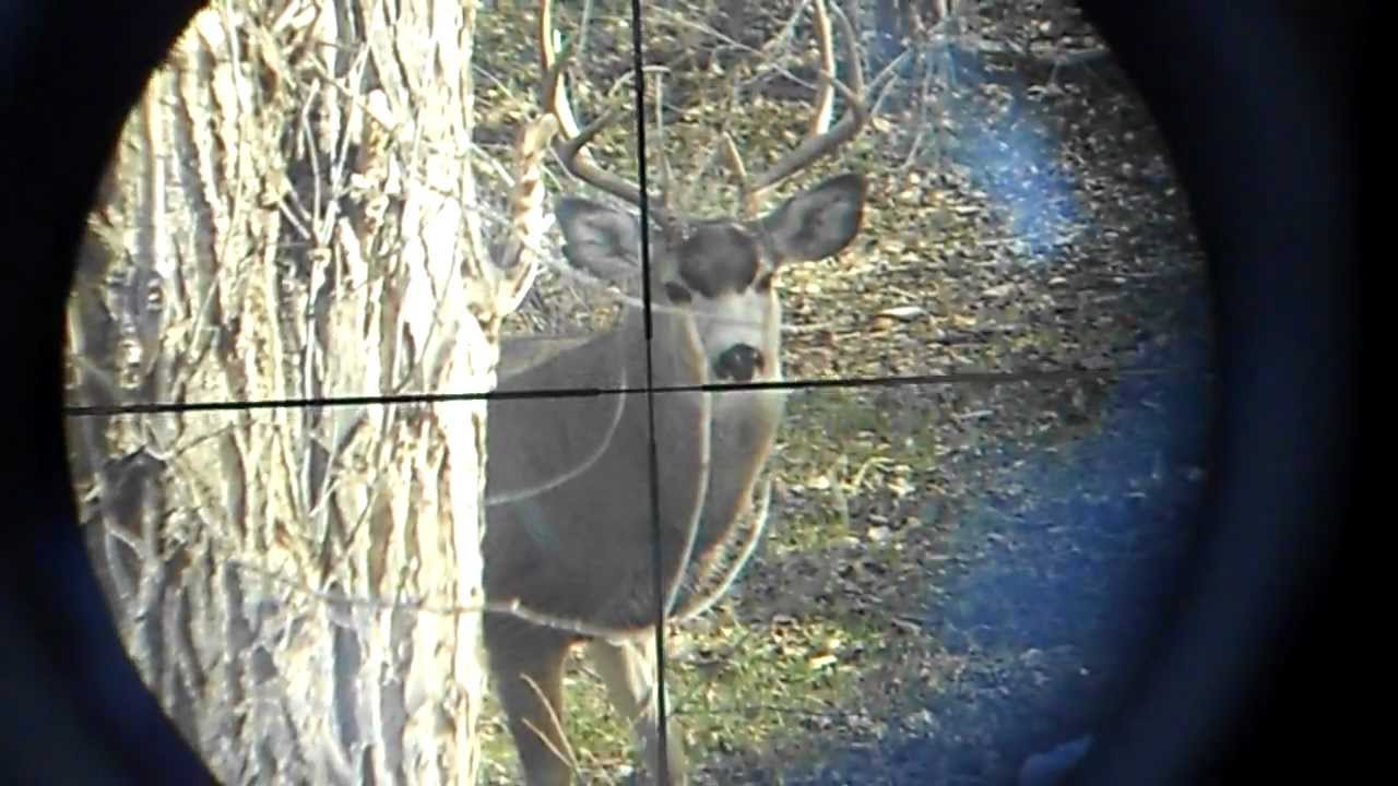Image result for The scope  Hunting Deer