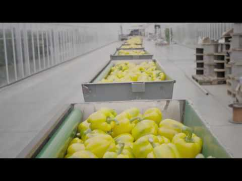 Microsoft & Priva Technology Help NatureFresh™ Farms Grow Vegetables