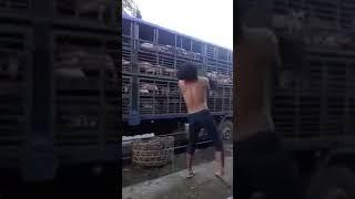 🙏 Kỷ lục Guinness Ném lợn bách phát bách trúng tại Việt Nam.