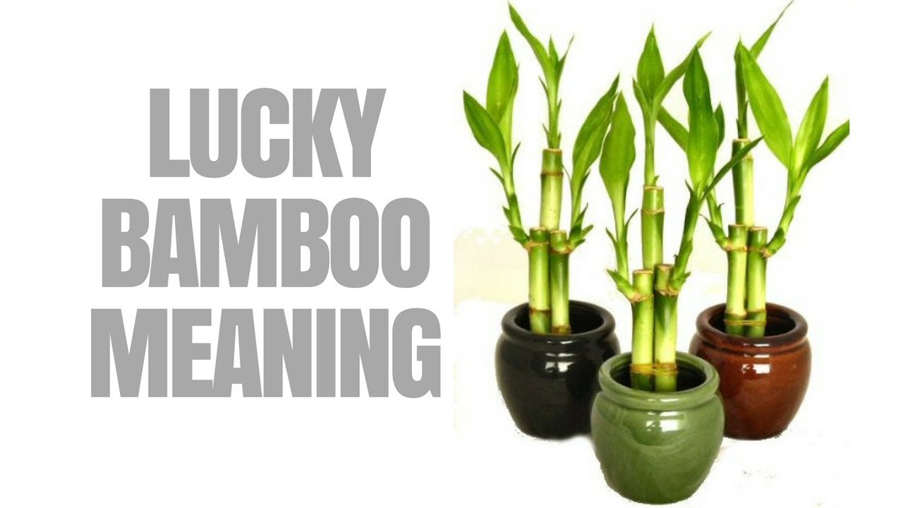 Good Feng Shui Plants