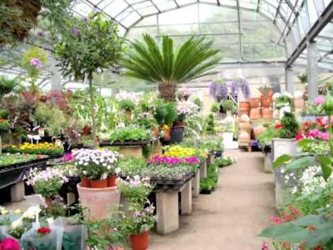 Horsfields Plant Nursery Silkstone Pot House Hamlet