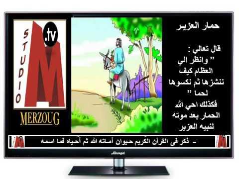 ذكر فى القرآن الكريم حـيوان أمـاته الله ثم أحـياه فما اسمه Youtube