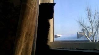 Кот опять грустит(((((
