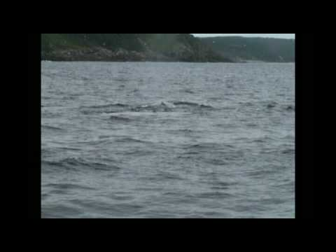 25th July 2009 Whale Encounters on Carson Noel's D...