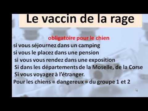 Vaccin Chiot Calendrier.Savez Vous Tout Sur Le Vaccination Du Chien Conseils