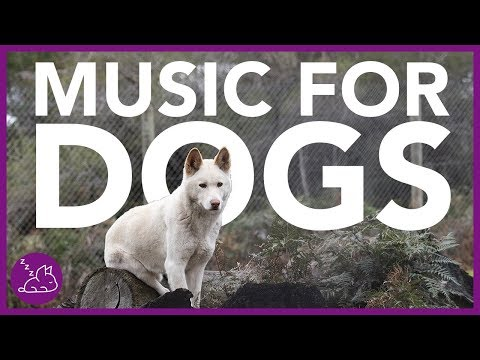 Music For Dogs: 15 Hours of Deep Relaxation Music