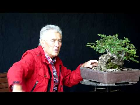 INTERNATIONAL BONSAI ACADEMY with Walter Pall 2013 - Case Study 9/ Fairy Tale Style