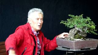 INTERNATIONAL BONSAI ACADEMY with Walter Pall 2013 - Case Study 9/ Fairy Tale Style