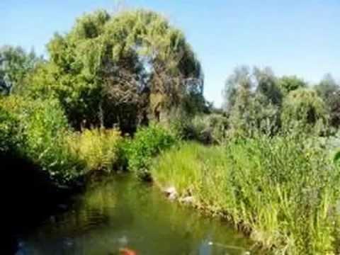 Sortie jardin aquatique st didier sur chalaronne youtube - Les jardins aquatiques saint didier sur chalaronne ...
