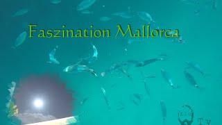 Faszination Mallorca: bunte Fische, klares Wasser - fascinating Majorca: colourful fish, clear water