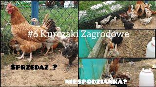 #6 Kurczaki zagrodowe: Sprzedaż oraz NIESPODZIANKA ?