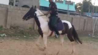 horse riding in tirupathi