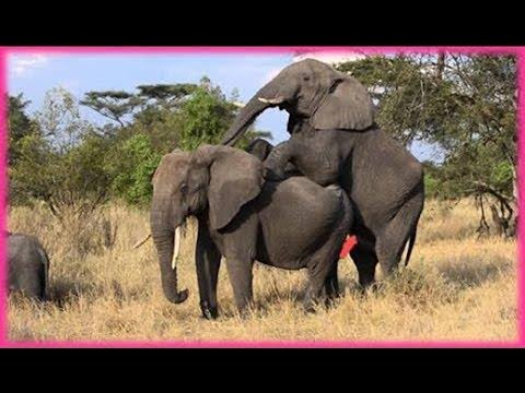 Attacks Of Wild Animals 2017 - The best hunting phase of Wildlife Caught On Camera Amazon Tribes
