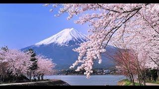 [ Natural 4k ] Japan Nature , Japanese Animals, Rainforests, Jungles, and Nature