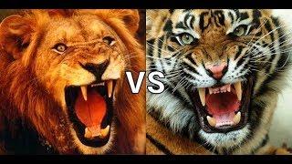 「ライオン」と「トラ」はどっちが強い? ライオン キング 虎はアジアを...