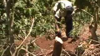 Encuentran cadaver enterrado en municipio de Panchimalco