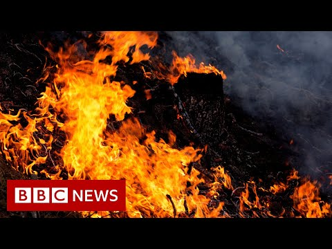 Record-setting Wildfires Are Out Of Control In The US, Brazil And Siberia - BBC News