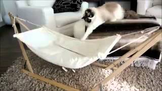 Приколы с животными. кот и гамак