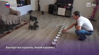 Под Воронежом собака породы кане корсо родила 19 щенков