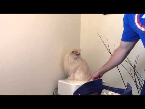 Funny cat fail – don't poke the kitty…whoops!