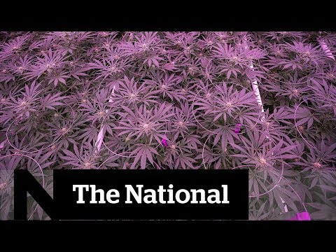 Are power grids ready for legalized cannabis? | The Question