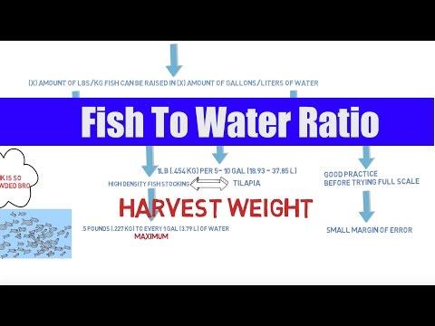 Fish To Water Ratio | Aquaponics