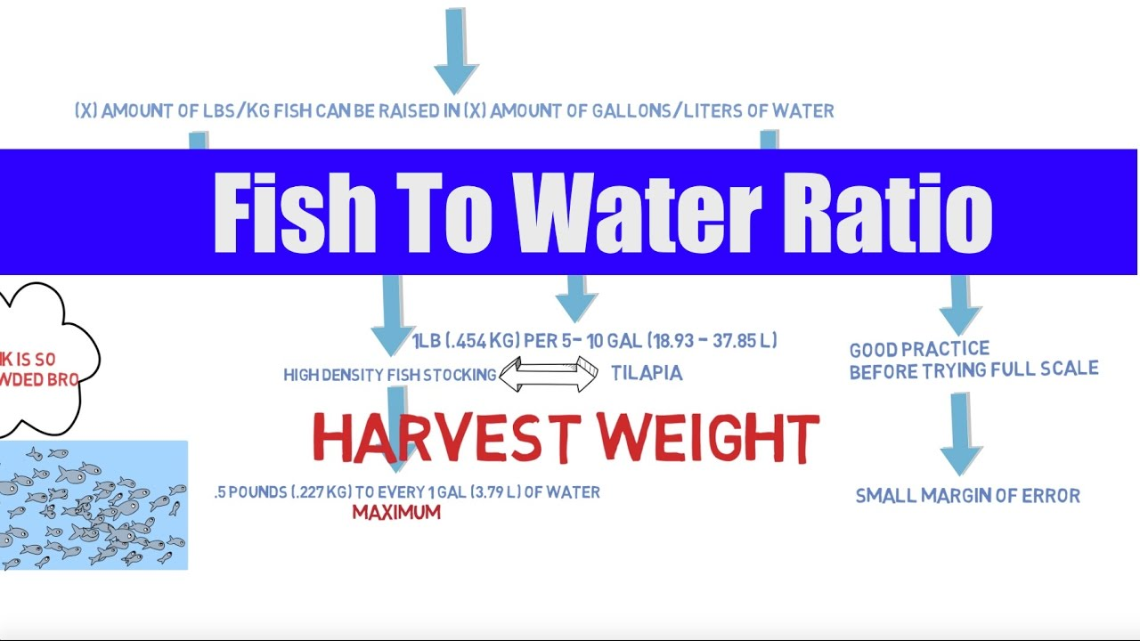 Fish To Water Ratio Aquaponics