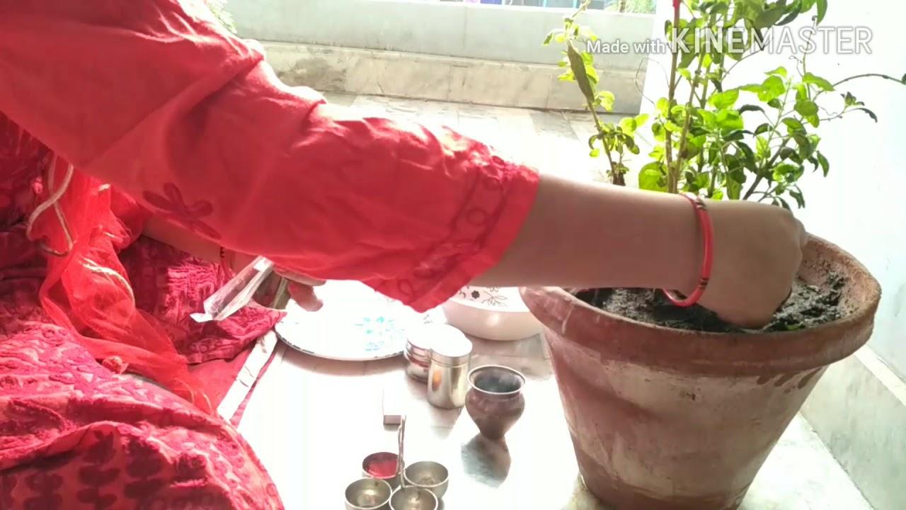 त लस प ज त लस व द ई प ज Tulsi Pooja At My Home Amita Ki Kitchen Se Youtube