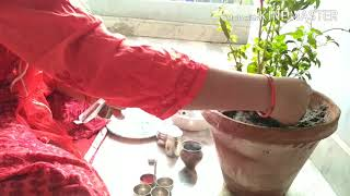 तुलसी पूजा 🙏 🙏 /  तुलसी विदाई पूजा /tulsi pooja at my home/Amita ki KITCHEN se