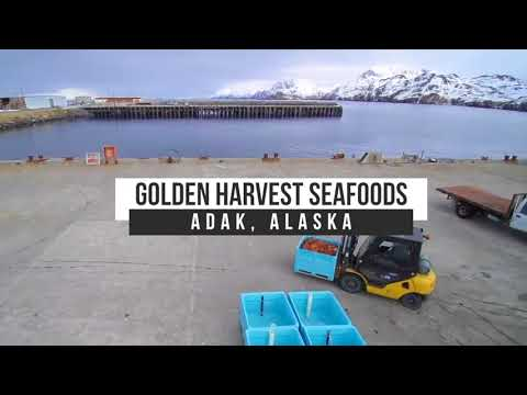 Live Alaska Golden King Crab Shipped To China